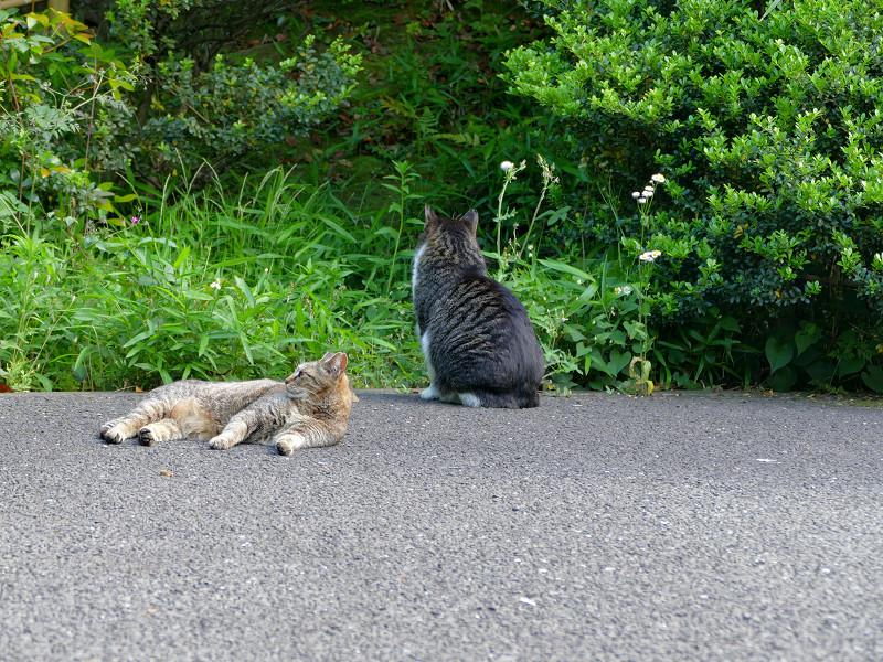 境内の端の猫2匹2