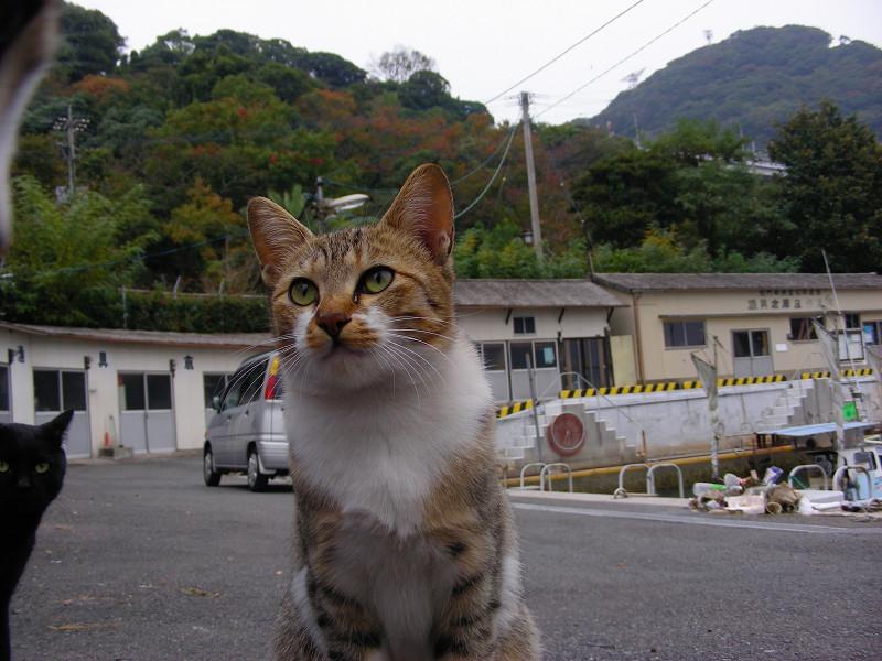 山あいの港の猫たち1