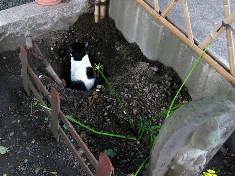 穴に入ってる白黒猫