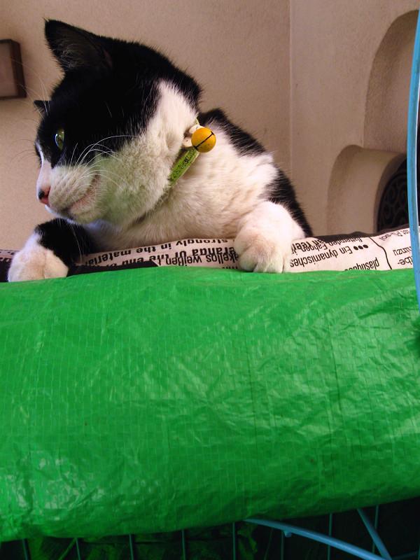 見下ろしてる黒白猫1