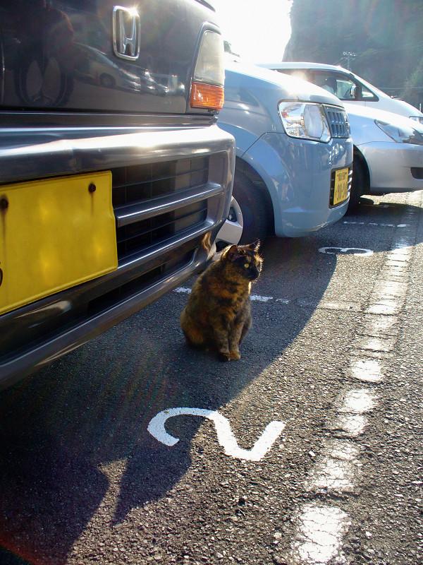 駐車場のサビ柄猫1