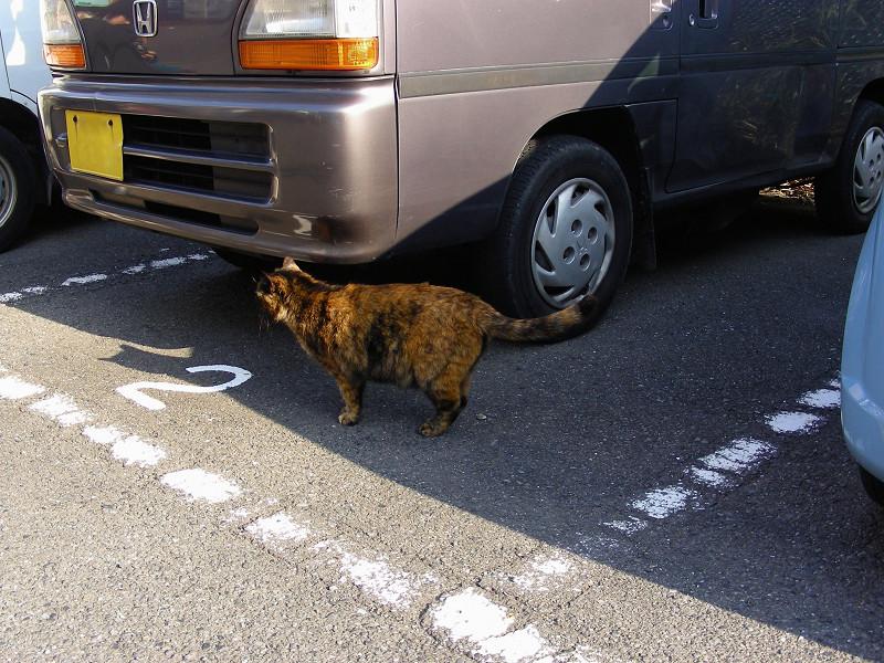 駐車場のサビ柄猫2