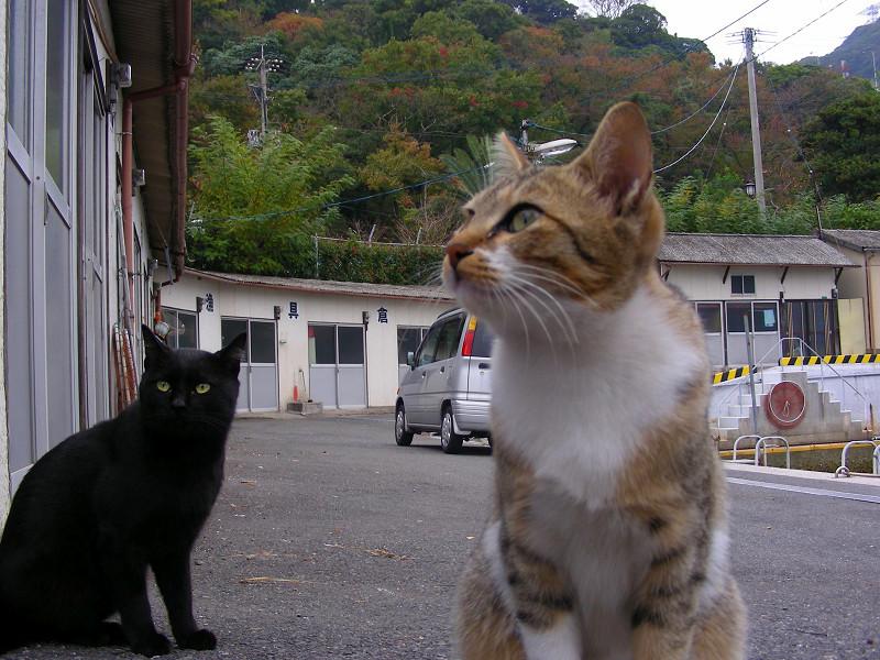 山あいの港の猫たち2