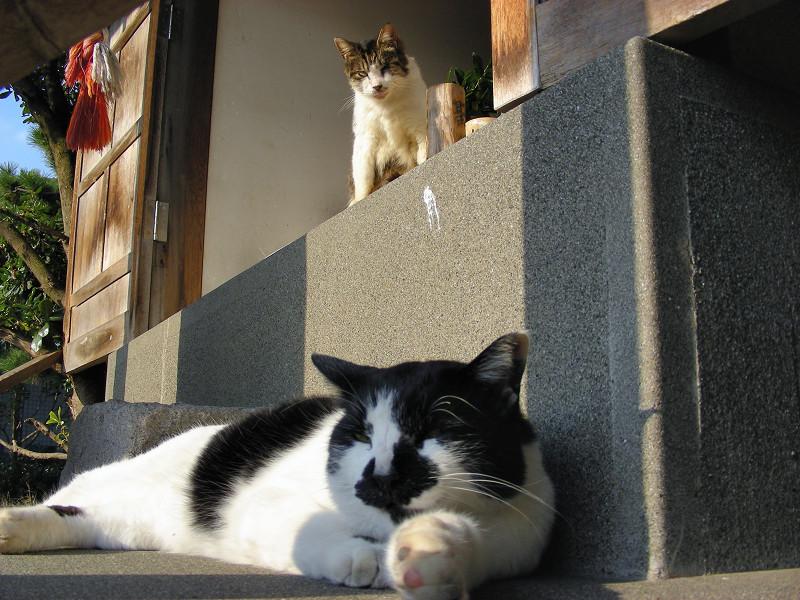 祠の猫ローアングル2