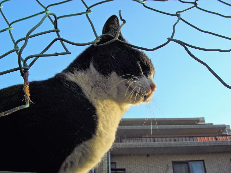 金網の破れ越しの猫たち2