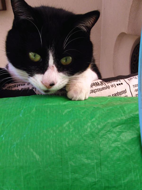見下ろしてる黒白猫2