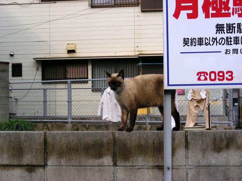 看板とシャム猫3