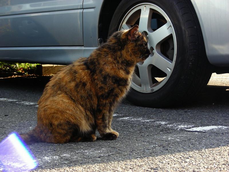 駐車場のサビ柄猫3