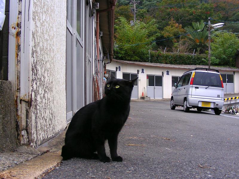 山あいの港の猫たち3