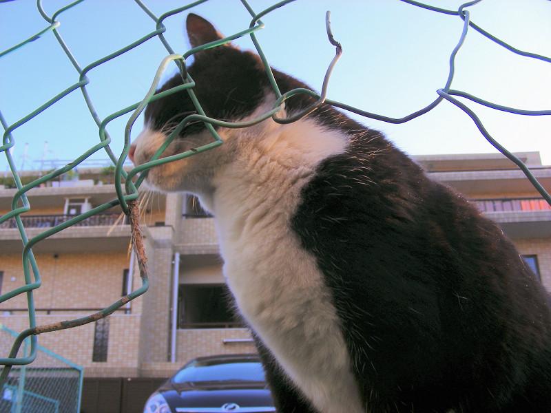 金網の破れ越しの猫たち3