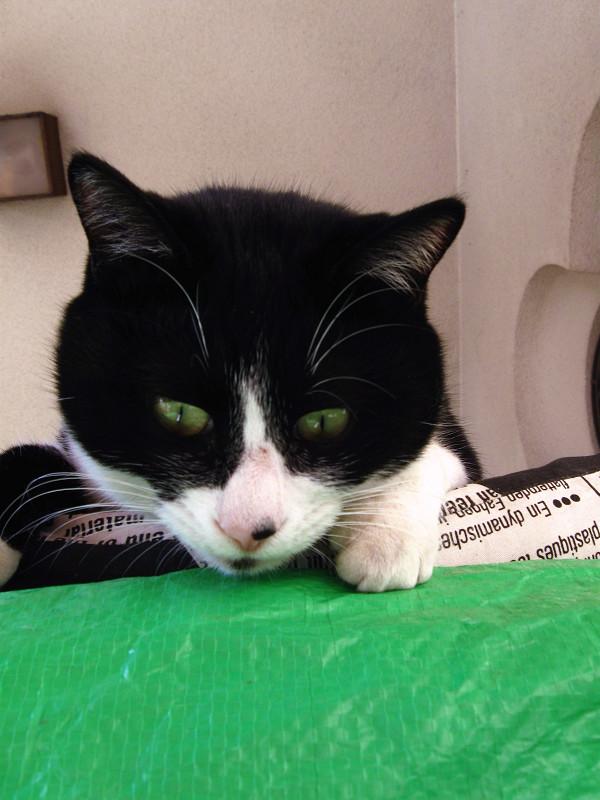見下ろしてる黒白猫3
