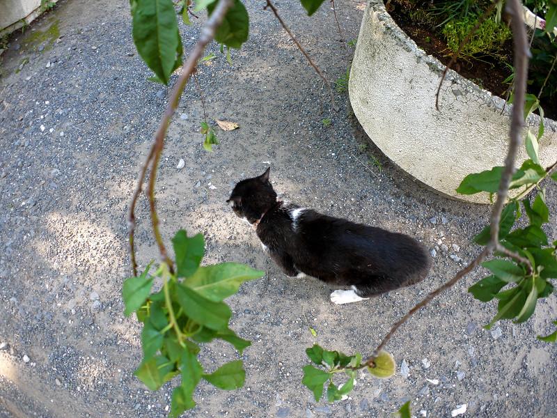小枝と黒白猫1