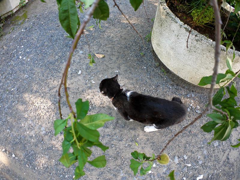 小枝と黒白猫2