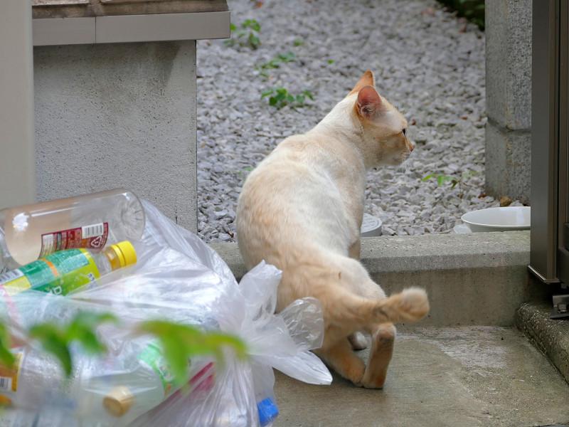 座り込む白系猫1