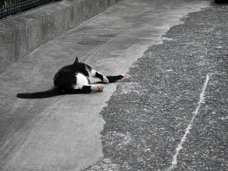 転がって伸び縮みする猫1