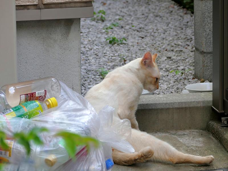 座り込む白系猫2
