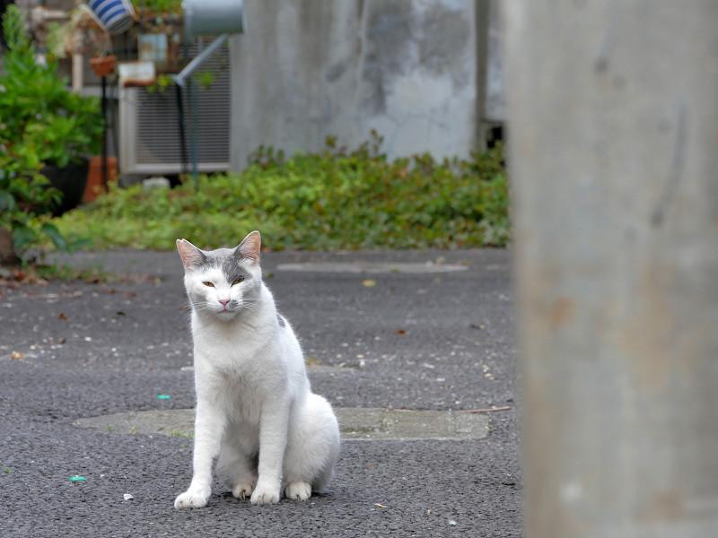 路地奥の猫2