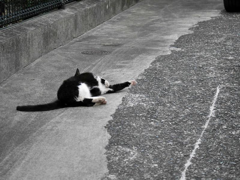 転がって伸び縮みする猫2