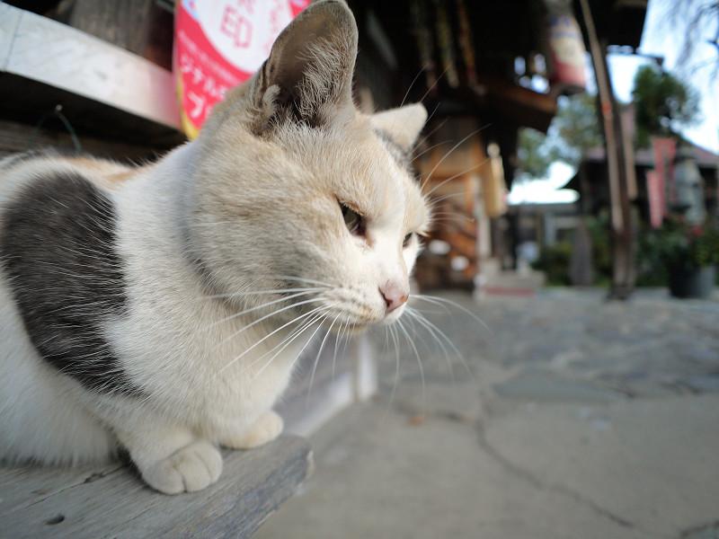 横から見ている薄い柄の三毛猫3