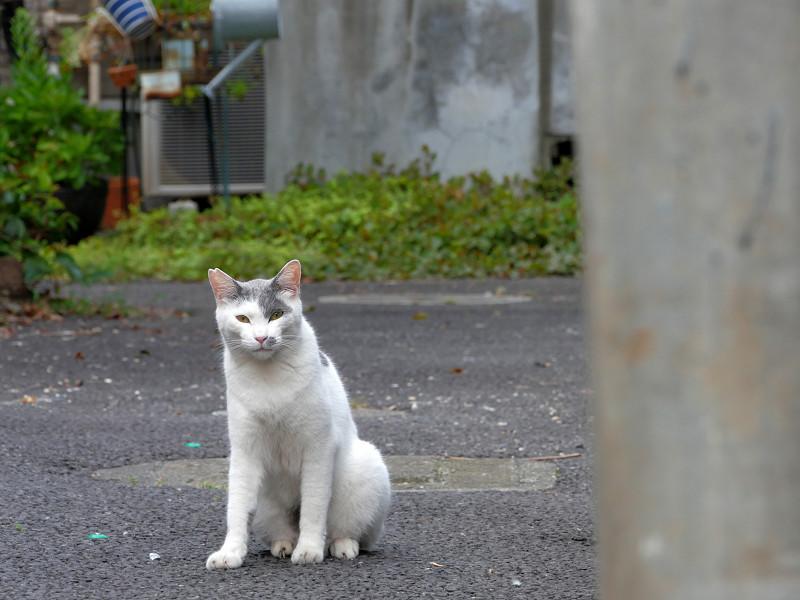路地奥の猫3