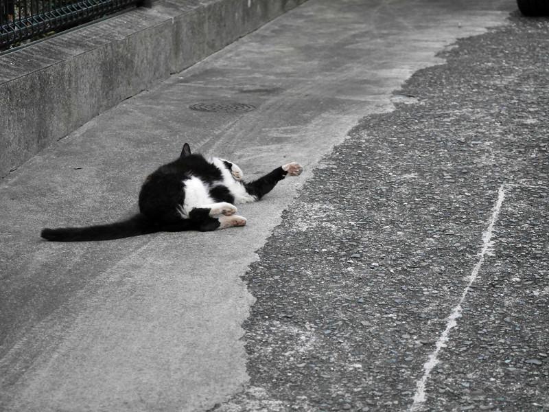 転がって伸び縮みする猫3