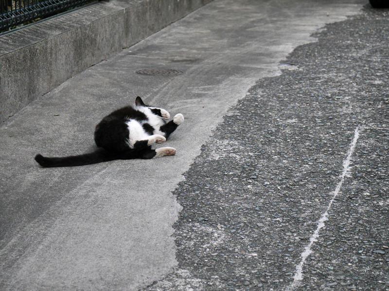 転がって伸び縮みする猫4