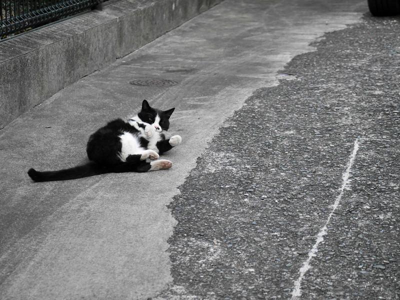 転がって伸び縮みする猫5