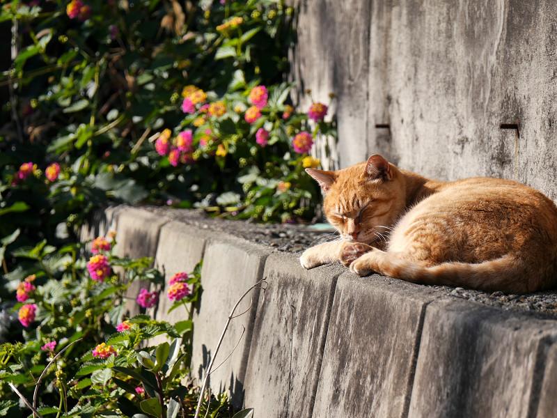 草花と茶白猫1