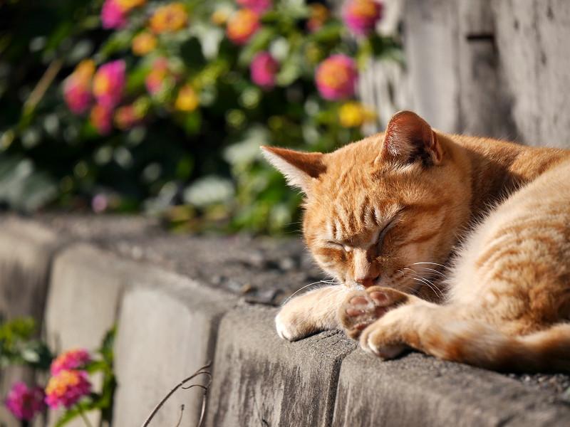 草花と茶白猫2