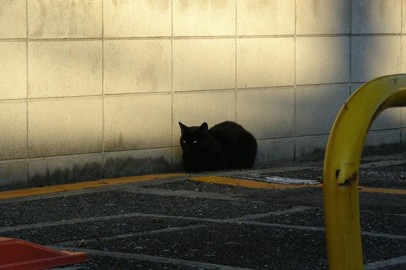 ブロック前の黒猫1
