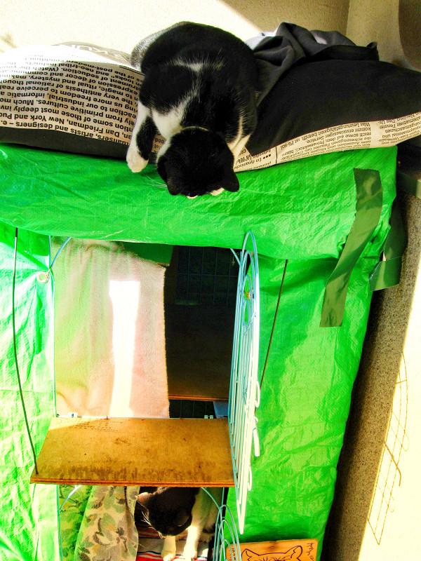 ハウスの回りの猫たち1