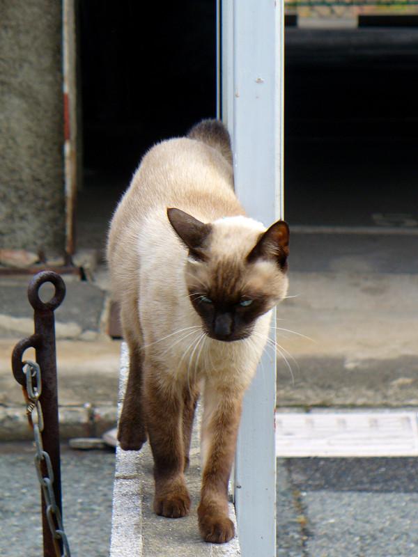 近寄ってきた洋風の猫1