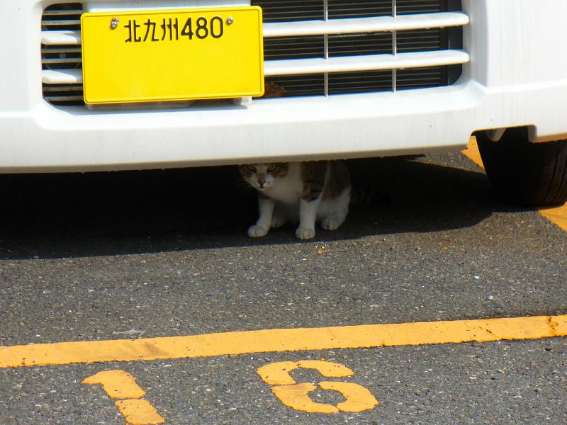 車の下にいた猫1