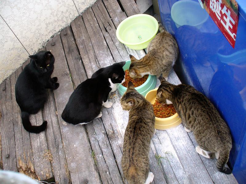 食事中の猫たち1