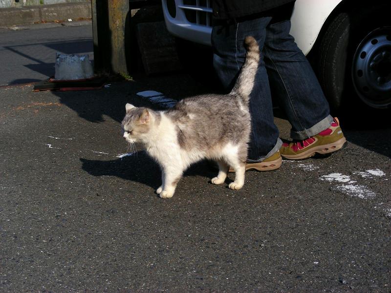 待っている洋風の猫2