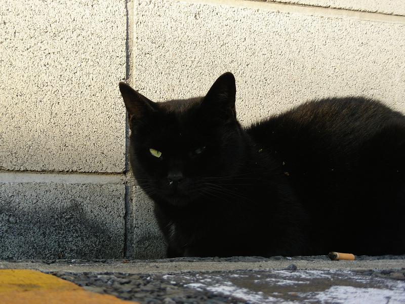 ブロック前の黒猫2