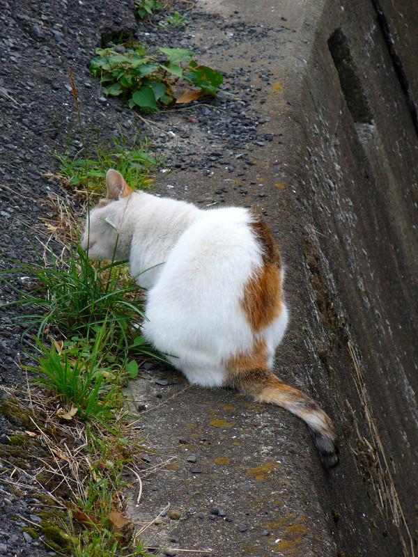 川の横で草を食う猫2