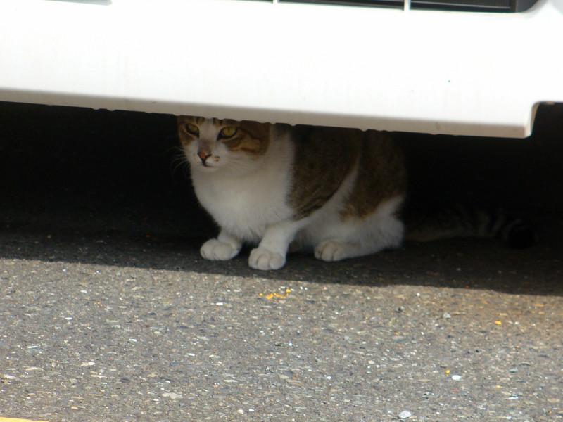 車の下にいた猫2