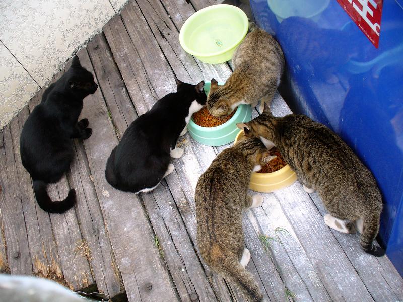 食事中の猫たち2