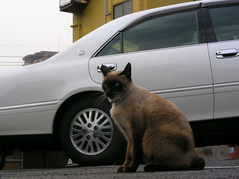 近寄ってきた洋風の猫3