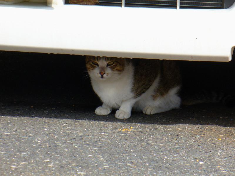 車の下にいた猫3