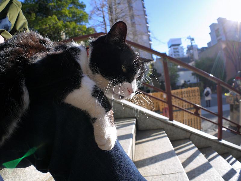 膝で日向ぼっこの黒白猫2