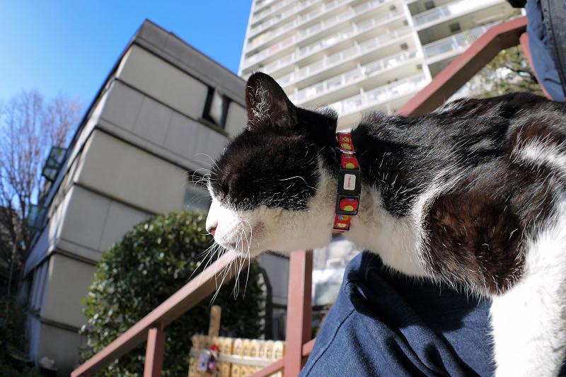 膝で日向ぼっこの黒白猫3
