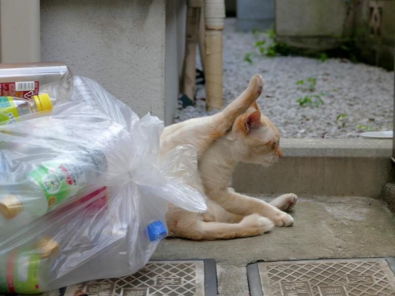 蹴りを入れてる風の白系猫1