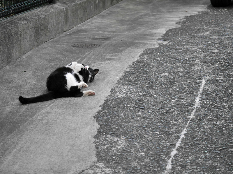 体を捻る黒白猫1