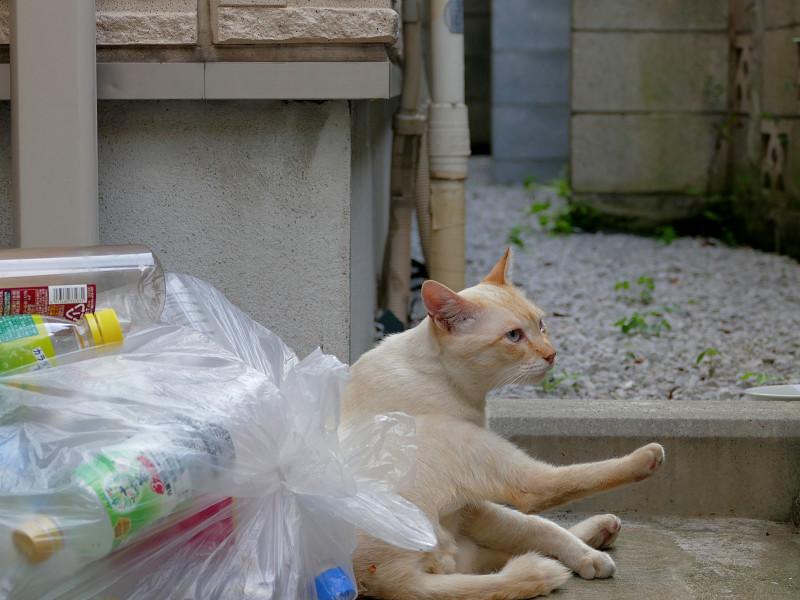 蹴りを入れてる風の白系猫2