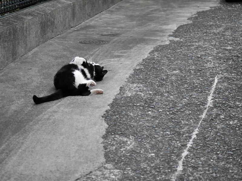 体を捻る黒白猫2