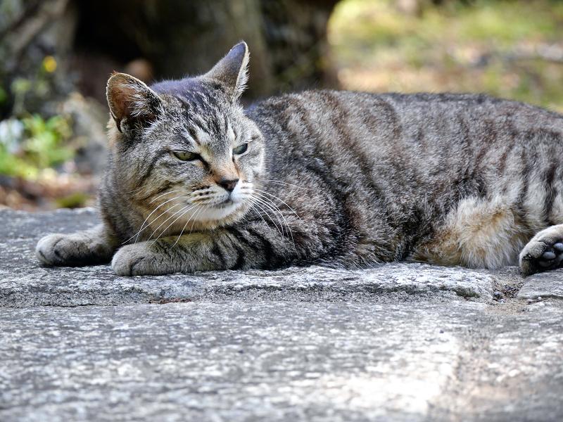 無表情なキジトラ猫2