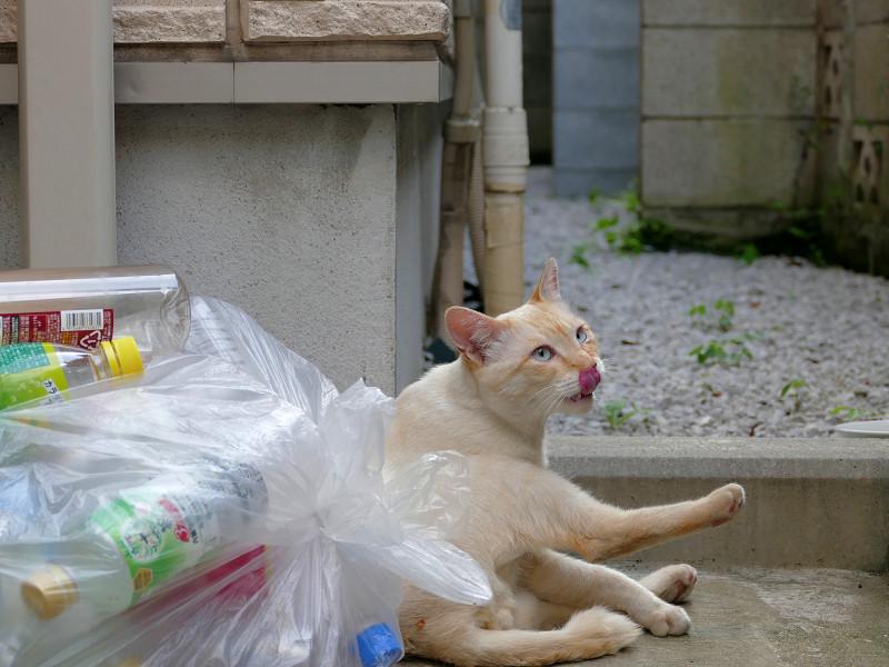 蹴りを入れてる風の白系猫3