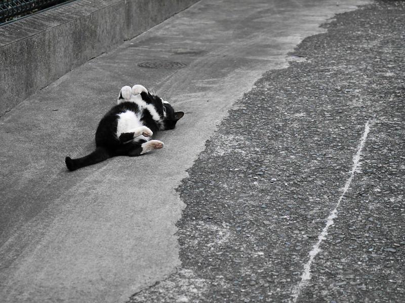 体を捻る黒白猫3
